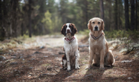 Hiking Off-Leash: What Dog Owners Need to Know // Backpacker Magazine
