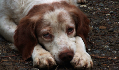 How to Save Your Dog's Life // Backpacker Magazine